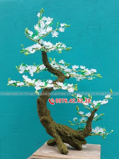 Hoa da pha le tai O Cho Dua