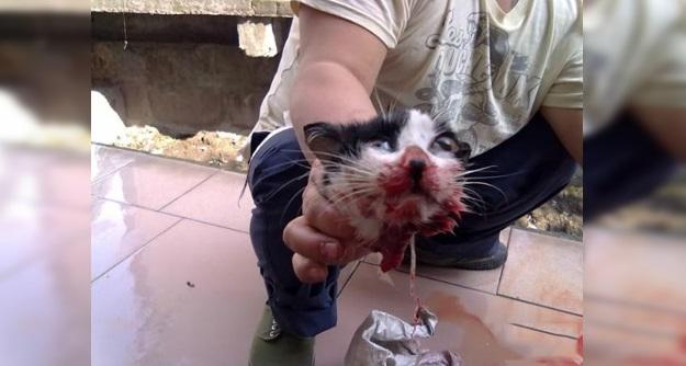 Kejamnya...Lelaki Brutal Penggal Kepala Kucing Tanpa Belas Kasihan!!!