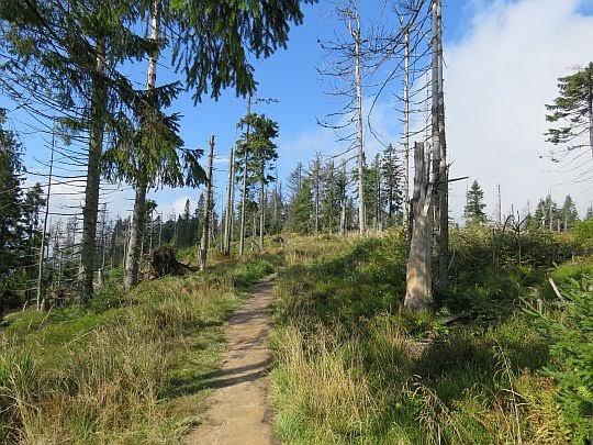 Ścieżka na Turbacz.