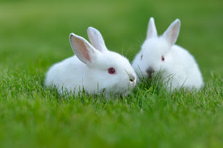 rabbits fun facts animal lovers intelligent pets