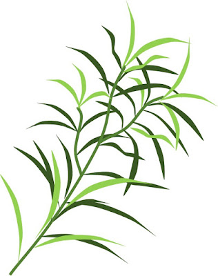 Tea tree( Melaleuca alternifolia) -7 Favourite Ingredients For Acne Prone Skin