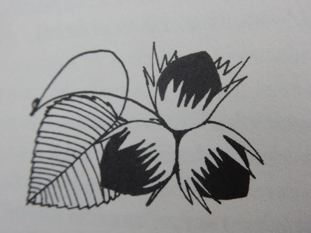 orzechy, leszczyna, drzewo