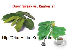 khasiat MANFAAT klorofil hijau daun SIRSAK sinergis N Green untuk kesehatan