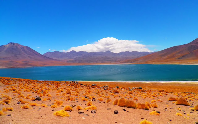 Laguna Miscanti - Atacama - Chile