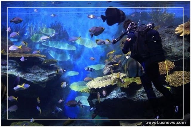 Siam Ocean World  - Top 7 Best Places to Travel in Bangkok, Thailand at Least Once in Your Life Time