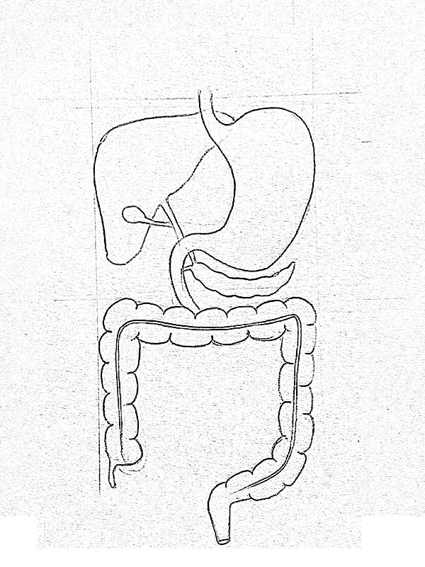 It's just a picture of Légend Drawing Of The Digestive System