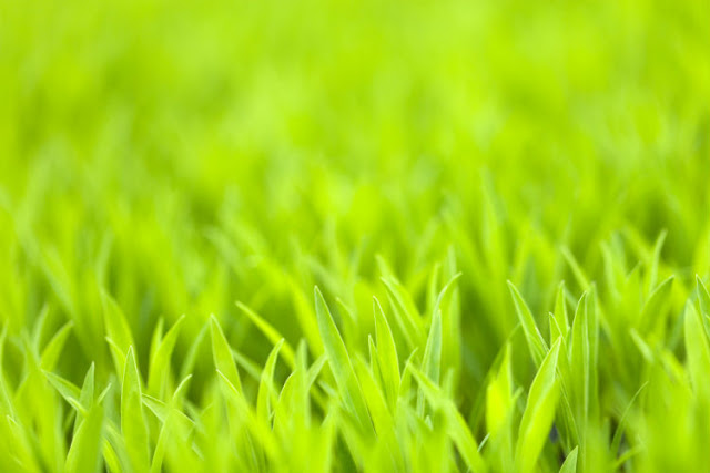 artificial grass plants