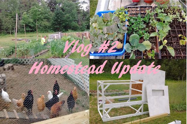 Vlog #2 Homestead Update