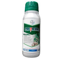 fungisida previcur-N, previcur-N, bayer indonesia