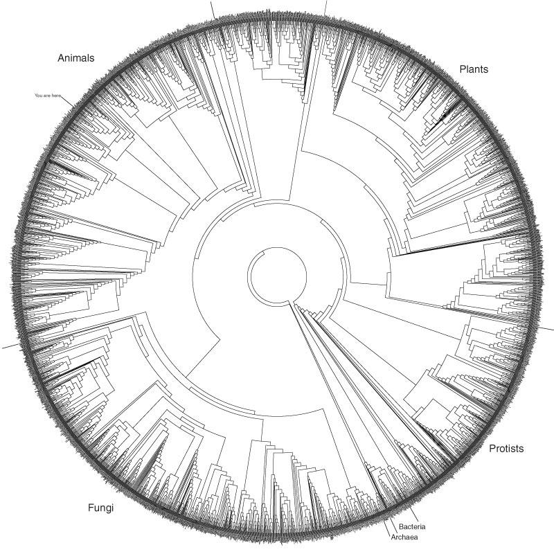 Radial tree of life