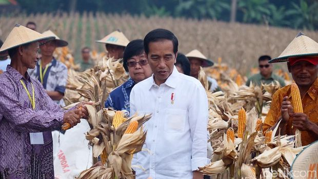 Jokowi Heran Jagung Petani Dihargai Hanya Rp3.500 per Kg