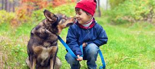 Ferienparkurlaub mit Hund