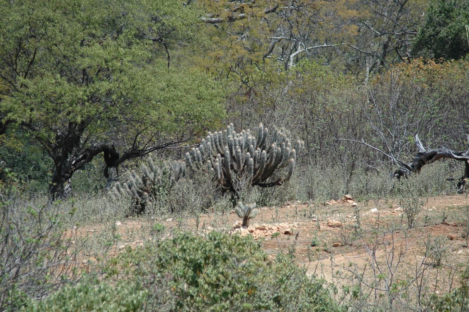 Resultado de imagem para desmatamento da caatinga