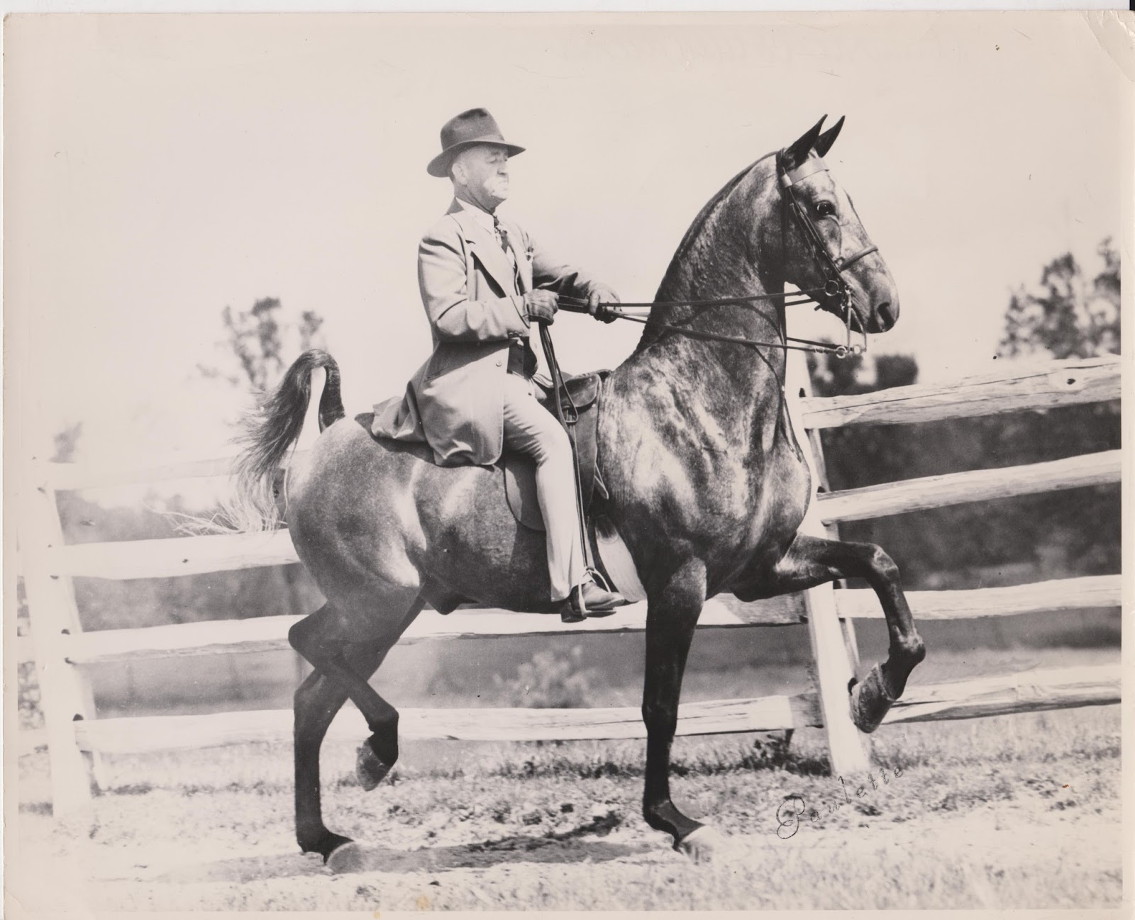 The American Saddlebred