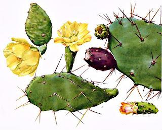 Nopal en Fichas de Plantas