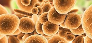 Μυστηριώδες μικρόβιο εξαπλώνεται «αθόρυβα» σε όλο τον κόσμο