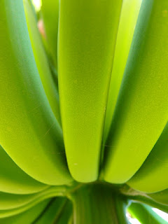 recette originale de la biomasse de bananes vertes