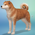 Review: The Sims 4: Cats & Dogs (PC)