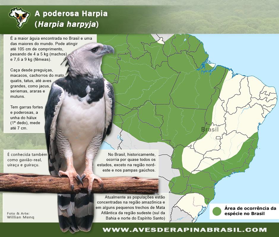 insetos da amazonia pdf