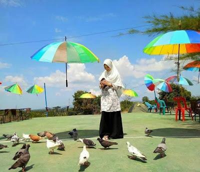 Lokasi Taman Wisata Burung Dara Indrapuri Aceh Besar