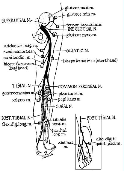 nerve pain diagram