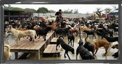 3,000 หมาจรจัดที่ต้องการความช่วยเหลือครอบครัวหนึ่งจึงตัดสินใจที่จะทำอะไรอย่างเหลือเชื่อ
