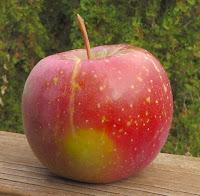 Evercrisp apple