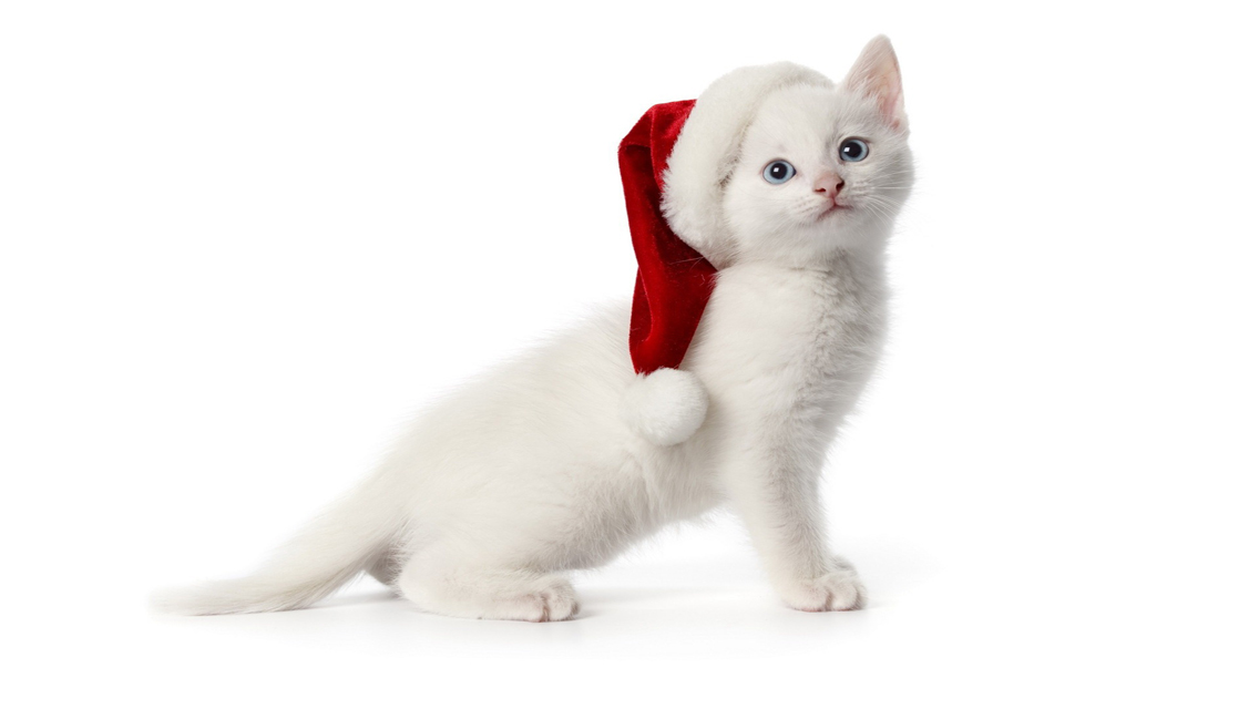 Free Download Cute Christmas Cat HD