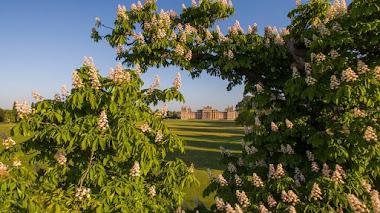 Blenheim Palace y el diseño paisajístico naturalista inglés