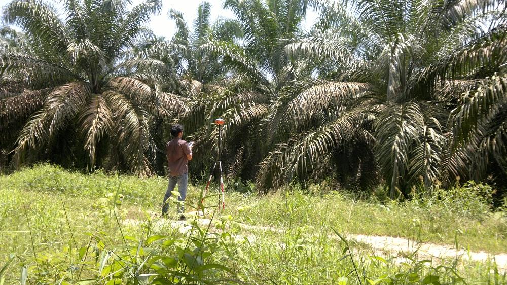 Survey di Kebun Sawit Suka Damai Sumatera Selatan