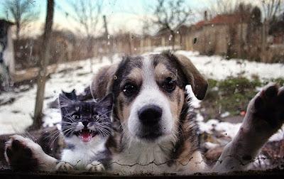 Foto divertida de perro queriendo entrar a casa