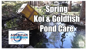 Spring Koi & Goldfish Pond Care