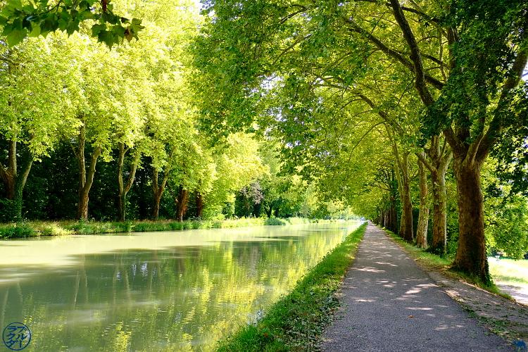 Le Chameau Bleu - Blog Voyage sur le Canal des Deux Mers à Vélo -  Berge du Canal