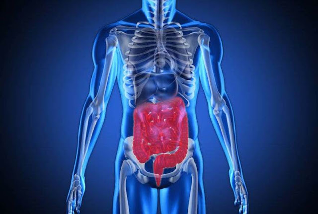 7 اعضاء حيوية يمكنك ببساطة العيش من دون وجودها كليا في جسمك؟