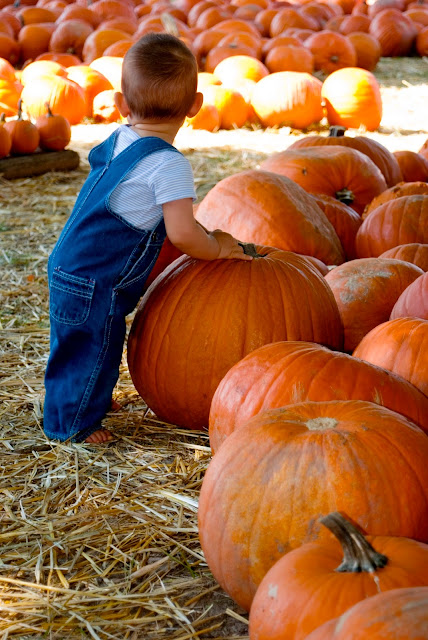 corpus christi area pumpkin patches