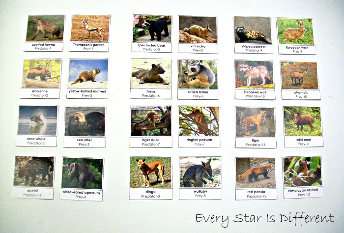 Mammals Unit 2 w/ Free Printables - Every Star Is Different