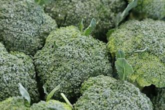 Broccoli - beneficii pentru bebelusi, copii si adulti