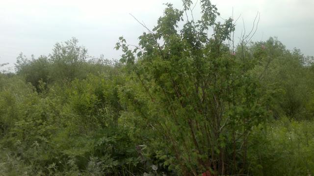 Зеленая зона на берегу протоки