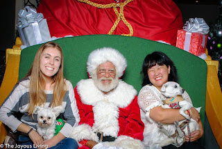 Santa HQ welcomes the dogs! @the joyous living