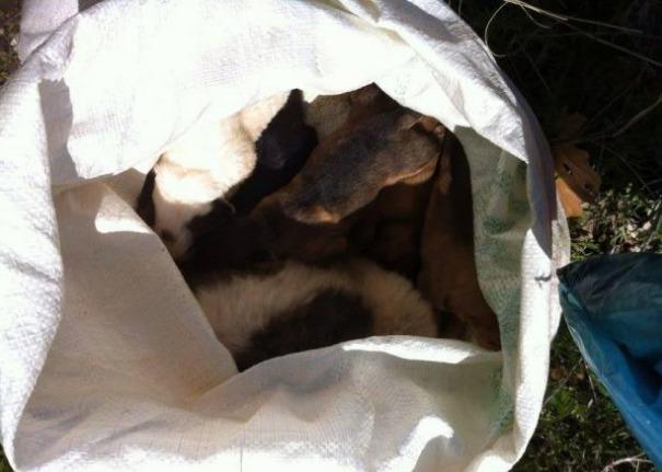 Σοκαριστικές εικόνες στην Αργολίδα: Βρήκε 7 κουτάβια ζωντανά κλεισμένα σε τσουβάλι να θηλάζουν τη νεκρή μάνα τους