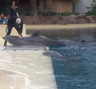 Dolphins at Mirage