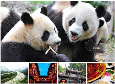 giand pandas city