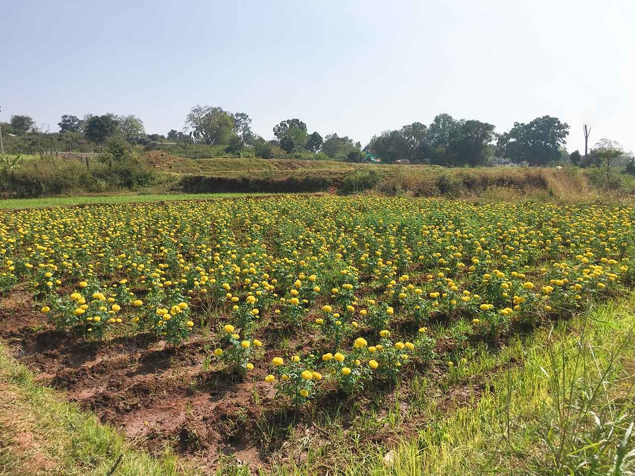 anu garden group stay in yelagiri