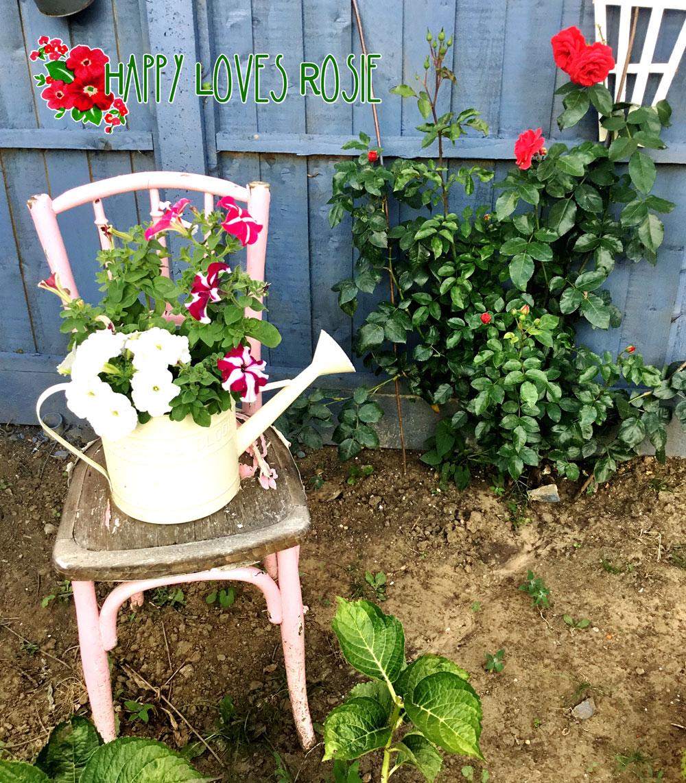 climbing red roses and petunia garden