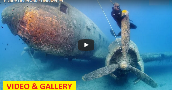 Video Amp Gallery 13 Bizarre Underwater Discoveries