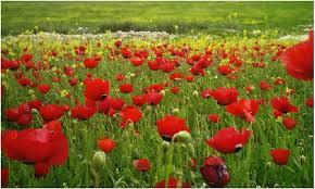 (بعد الفرع والجمرتين وقبل الحسوم)- اليوم دخول فصل الربيع..