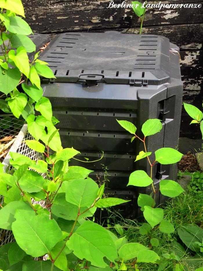 berliner landpomeranze ein berlin gartenblog der un perfekte kompost. Black Bedroom Furniture Sets. Home Design Ideas