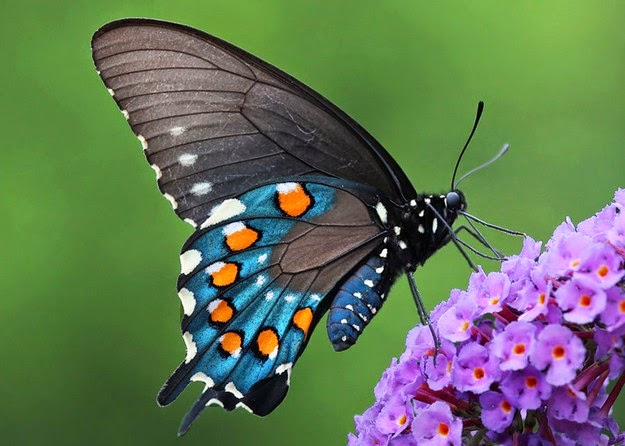 caterpillar-transformation-to-butterfly-6