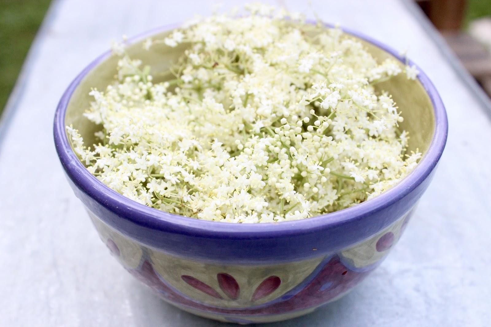 76b9563d4dba Elderflowers ready to be made into fermented elderflower soda.