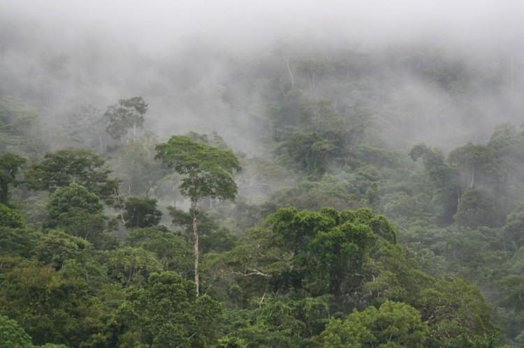 amazon rainforest south america - photo #17